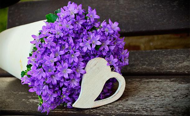 regalar flores planta maceta - cómprala en amazon