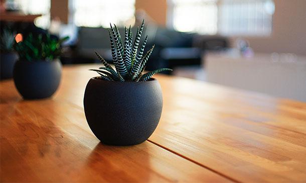 regalar planta cactus maceta - cómpralo en amazon