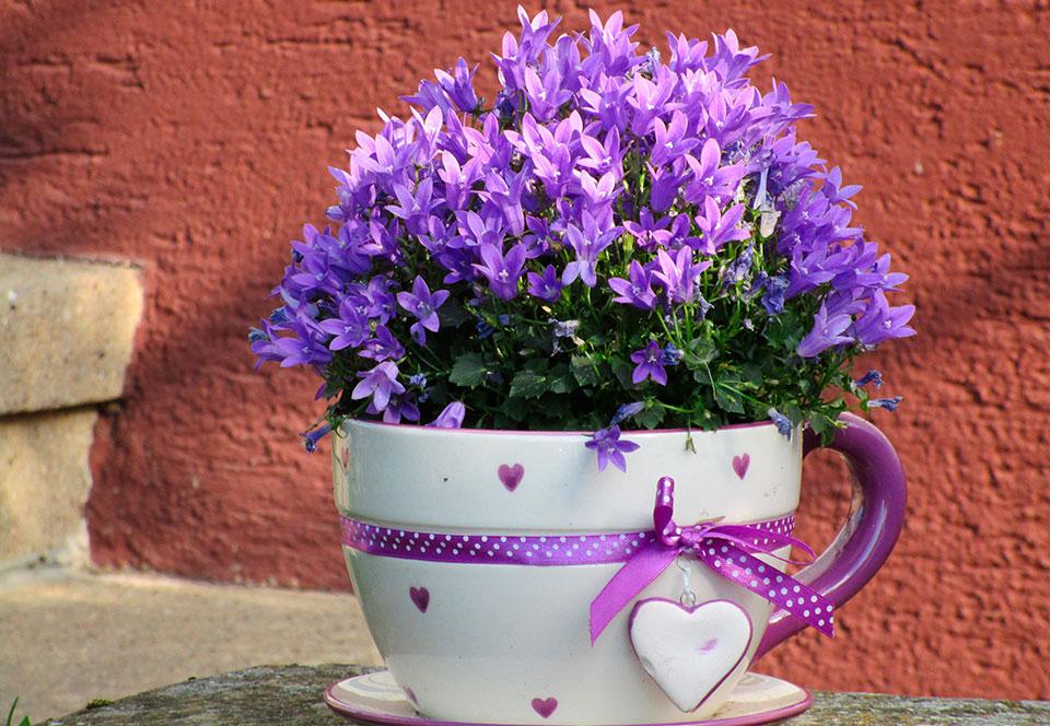 Plantas exterior todo el ao awesome cheap begonias with - Plantas de exterior resistentes todo el ano ...
